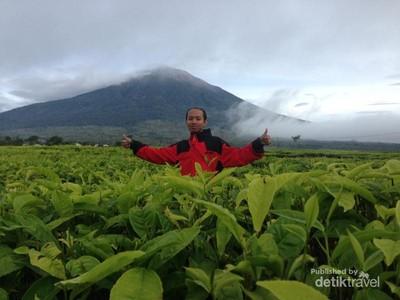 Penat? Yuk Intip Segarnya Kebun Teh Tertinggi di Indonesia