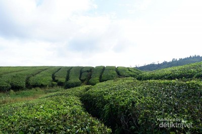 Ini Daerah Terdingin di Sumatera Barat, Suhunya 13 Derajat