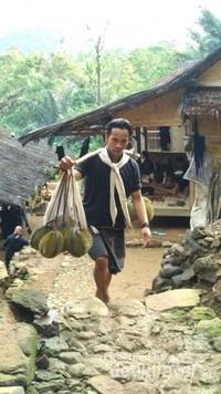 Musim durian, pesta durian