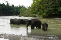 Bersiap-siap untuk memandikan gajah-gajah