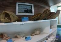 Aneka penyu dan kerang yang sudah diawetkan, disita karena termasuk kategori spesies yang dilindungi