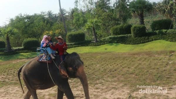 Naik gajah keliling kawasan Suan Thai Pattaya
