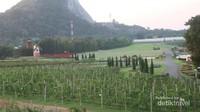 Terdapat banyak objek menarik di kawasan perkebunan anggur, salah satunya adalah replika kincir angin ala Belanda.