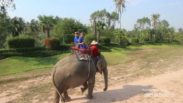 Di tempat ini kita bisa berkeliling kawasan dengan gajah