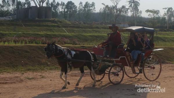 Selain itu pengunjung akan diajak berkeliling area persawahan dengan kereta kuda