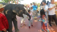 Kita juga bisa memberi makan gajah kecil yang imut dan jinak