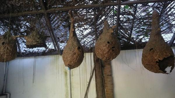 Aneka sarang lebah yang diambil dari alam