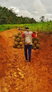 Durian dari Suku Baduy untuk dibawa pulang oleh wisatawan