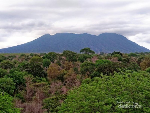Hutan hijau dilihat dari gardu pandang