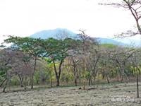 Kawasan Savana Bekol