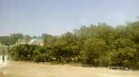 Sesaat setelah keluar dari Bandara King Abdul Aziz Jeddah, terlihat suasana hijau rerumputan di tepi jalan.
