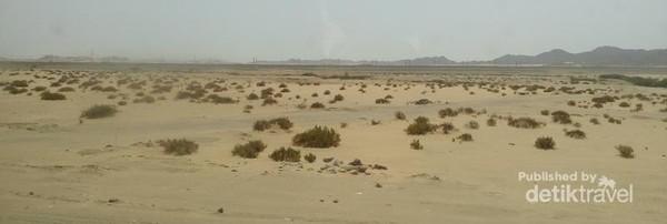 Di tengah gurun pasir, terdapat tanaman tetap bisa tumbuh disana.