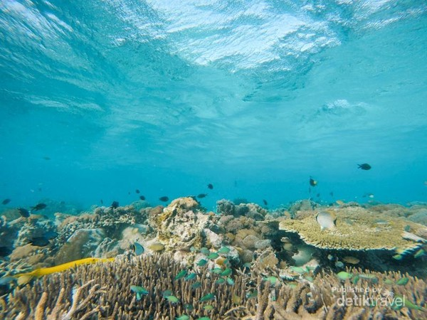 Warna-warni karang dan beragam ikan sungguh memesona