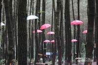 Hutan Pinus Semeru yang cocok buat ngadem ngilangin suntuk setelah penat akibat kerjaan