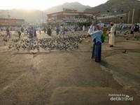 Di pagi hari, merpati ramai berkumpul di area belakang Masjidil Haram. Tepatnya di area menuju Mala maupun Masjid Jin.