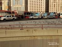 Di Madinah, kawanan merpati bisa dijumpai di dekat Pintu 6 atau area Masjid Ghomamah, di pintu 15, dan di dekat pintu 21.