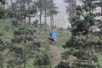 Wisata Selfie hutan cemara Di Grenden Pogalan Magelang