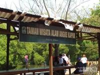 Taman Wisata Alam Ange Kapuk, adalah hutan konservasi mangrove yang ada di Pantai Indah Kapuk Jakarta Utara. Selain melihat hutan mangrove sesekali melintas biawak dan terdengar kicauan burung dari sela pepohonan.