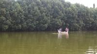 Di Grand Maerakaca kita bisa menyewa perahu atau sepeda air untuk menyusuri hutan bakau