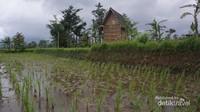 Sawah dan Lumbung Padi di Kampung Budaya Padi Pandan Wangi