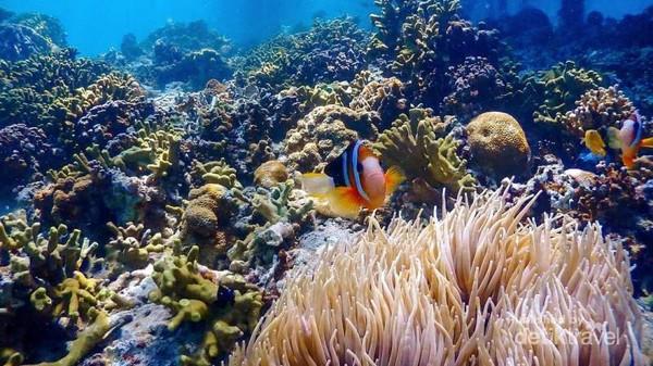 41 Gambar Pemandangan Alam Bawah Laut Terbaru