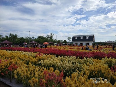 Taman Bunga Luar Negeri? No, Ini di Aceh