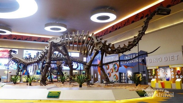 Kerangka dinosaurus jenis Brachiosaurus yang tinggi nya mencapai 5 meter di dalam Museum Dino.