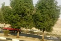 Selain perbukitan, adapula pohon yang cukup rindang.Di bawah pohon-pohon ini terdapat selang air untuk menyirami pohon