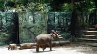 Gajah Sumatera yang pintar memainkan drama untuk menghibur dan mengedukasi pengunjung