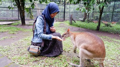 Mau Bermain di Taman Safari Terluas Se-Asia, Jawa Timur Tempatnya