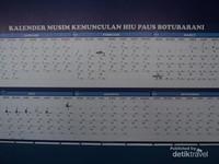 kalender kemunculan hiu