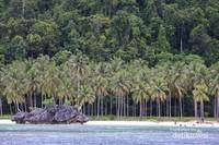 Pohon kelapa berderet sangat rapi