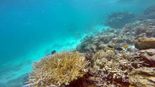 spot snorkeling di Pulau Mantabuan, Tun Sakaran Marine Park.