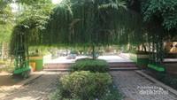 Kawasan alun-alun Martapura ditumbuhi banyak tanaman hias yang cantik, seperti lee kuan yew ini