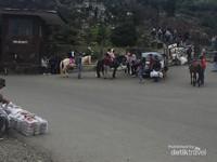 Banyak kuda yang bisa di sewakan ke pengunjung untuk berkeliling lokasi dengan berkuda.