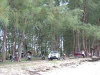 Pohon Pinus mendominasi lokasi santai dan berteduh para pengunjung dan parkir mobil