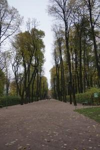 Pepohonan disini tinggi-tinggi dan rindang membuat taman semakin sejuk