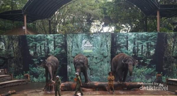 Salah satu show elephent story, yang menceritakan gajah dan pemburu