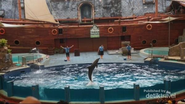 Kalian dapat melihat dolphin dan anjing laut yang show