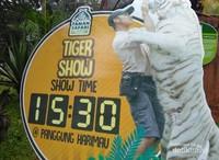 Tiger Show, lihat kelucuan harimau di @panggung Harimau