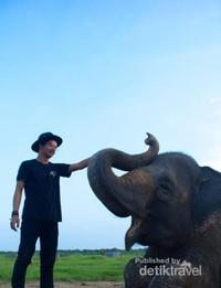 Gajahnya terlihat bahagia