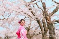 Cantiknya bunga sakura di awal bulan April.