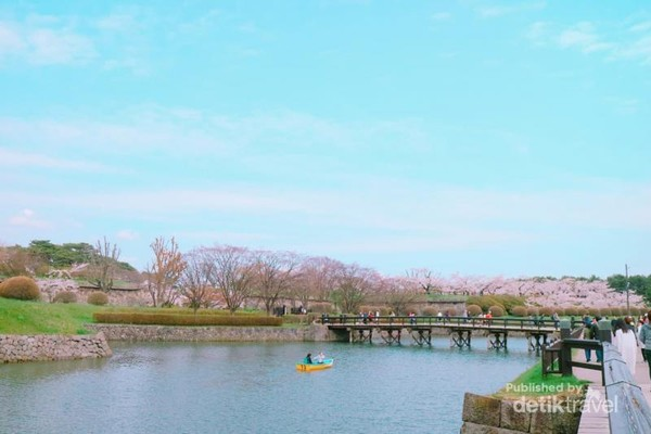 Menikmati sakura dengan berperahu di sungai-sungai yang mengelilingi kota.
