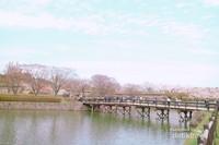 Jembatan dengan latar bunga sakura jadi salah satu spot foto favorit.