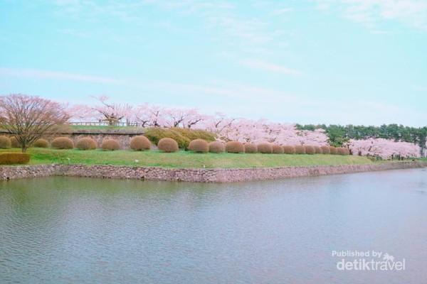 Menghabiskan waktu di taman adalah pilihan terbaik selama musim sakura.