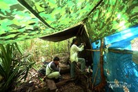Bersembunyi dan berdiam diri untuk melihat dan merekam atraksi tarian The Birds Of Paradise di hutan-hutan di Pulau Waigeo, Raja Ampat, Papua Barat