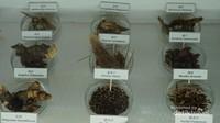 beberapa tempeh - tempeh yang digunakan until Damian herbal tea terse but