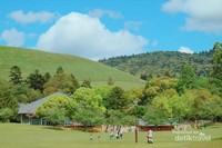 Bukit-bukit dan pepohonan menjadi latar pemandangan di Nara Park