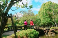 Memakai pakaian warna cerah yang kontras akan membuat foto-foto di Nara Park makin menyenangkan