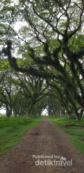 Hutan The Lord Of The Rings Ada di Banyuwangi